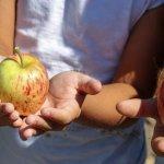 Темите за здравословния начин на живот са важни и необходими