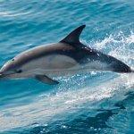 Ето защо делфините са толкова умни