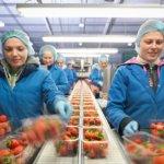 В Люксембург повече от половината работници са чужденци