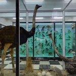 Музеите в страната отварят врати за ученици в деня след вота